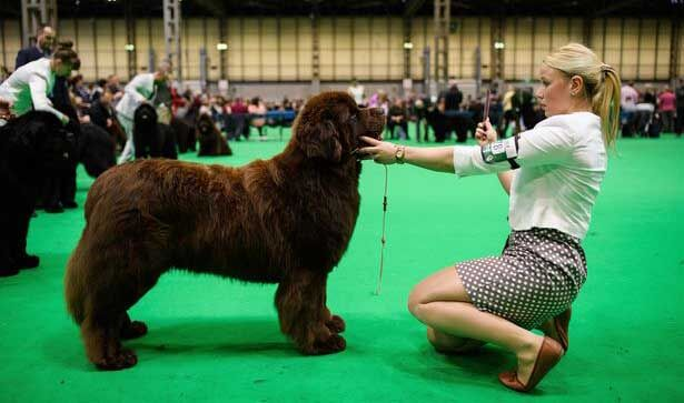 woman with dog at crufts