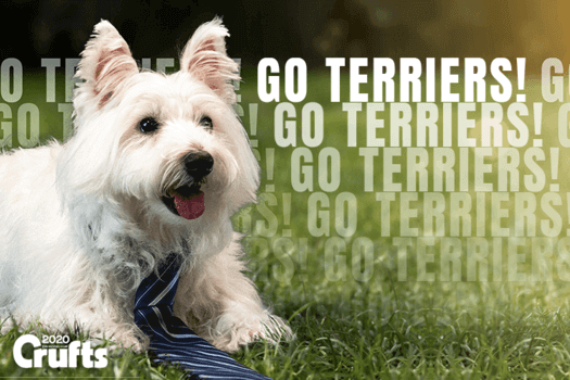 go terriers crufts 2020 with betpal dog mascot