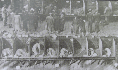 crufts historical image