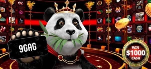 royal panda instagram promotion
